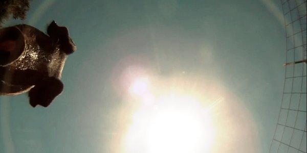 telecamera-cade-porcile-tuttacronaca
