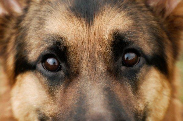 warren-cane-pastore-tuttacronaca