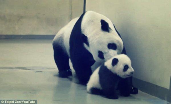 panda-nanna-tuttacronaca