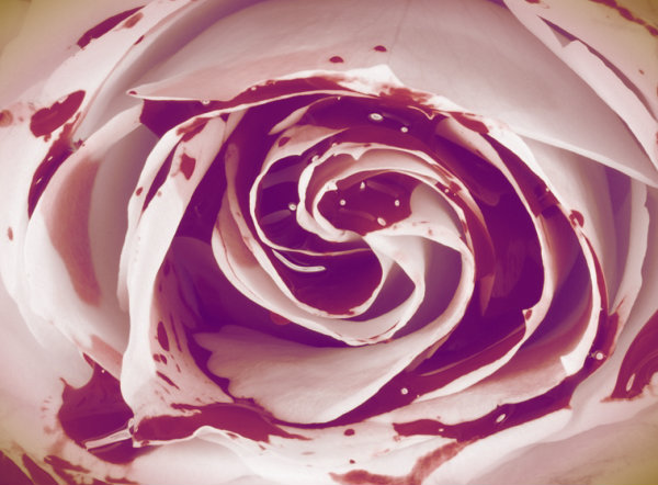 rose-blood-tuttacronaca